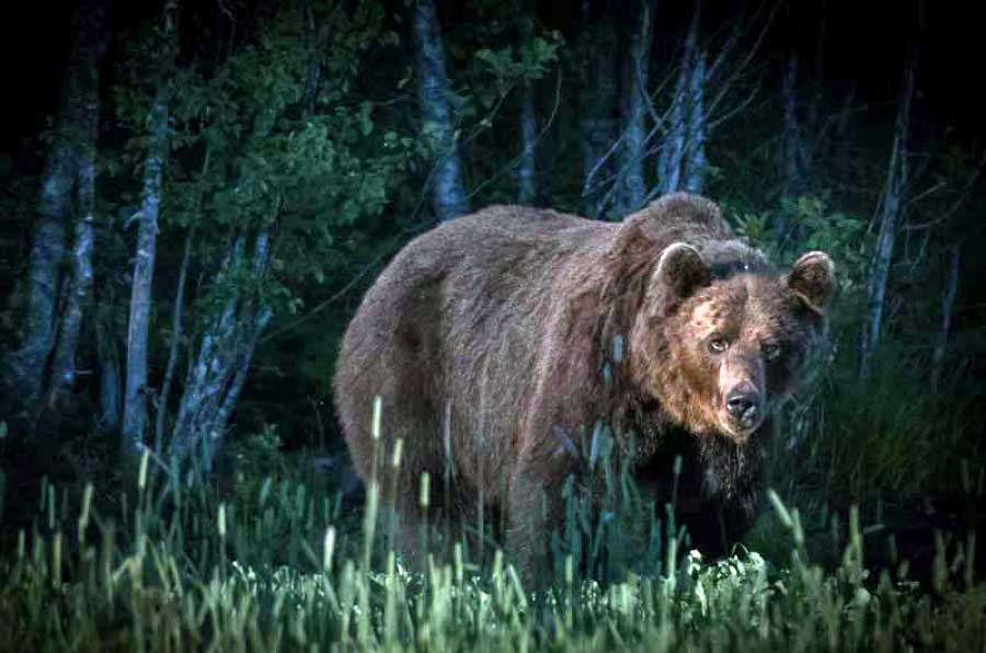 karhu-perinne
